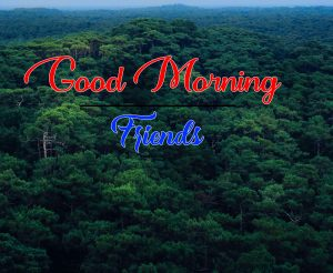 Good Morning Images Photo Download 2