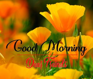 Good Morning Images Pics Pictures Download 2