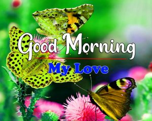 Good Morning Images Pics With Butterfly
