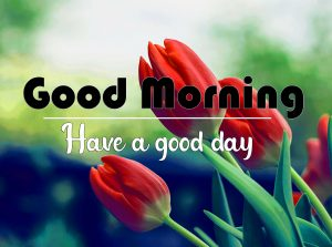 Good Morning Images Pics pictures for Whatsapp