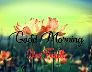 Good Morning Images Wallpaper Download With Flower