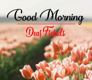Good Morning Images Wallpaper With Flower 2