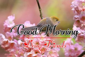 Good Morning all Images Photo Download 5