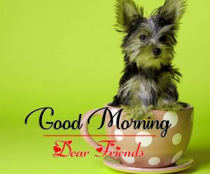 Good Morning all Images Photo Free 4