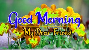 Good Morning all Images Photo Free 5