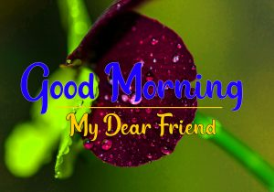 Good Morning all Images Photo Free 6