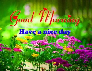 Good Morning all Images Photo New 4