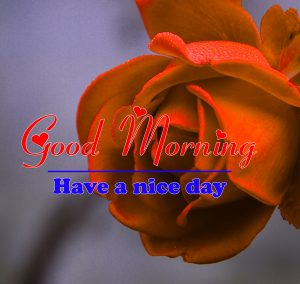 Good Morning all Images Photo With Rose