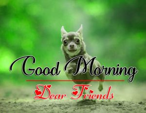 Good Morning all Images Pics Download