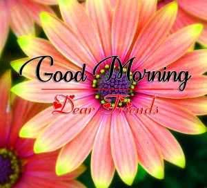 Good Morning all Images Pics Pictures Free