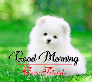 Good Morning all Images Wallpaper With Puppy