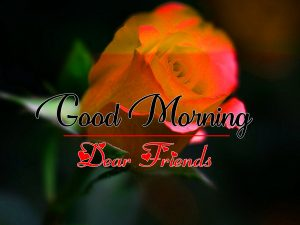 Good Morning all Images Wallpaper With Rose