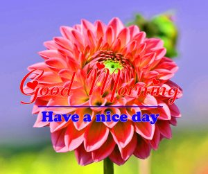 Good Morning all Images Wallpaper for Status