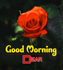 Latest Good Morning Download Images 3