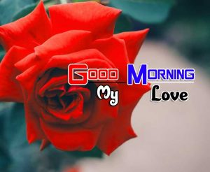 Latest Good Morning Pictures Images 4