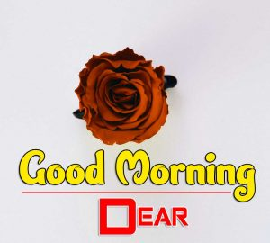 Latest Good Morning Pictures Images 5