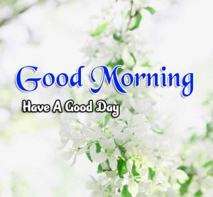 Latest Good Morning Wallpaper Images 4