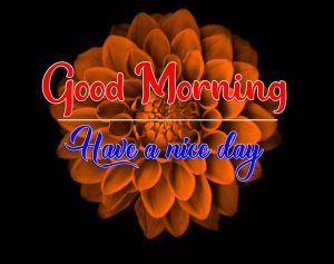 Latest New Good Morning Images Photo Download