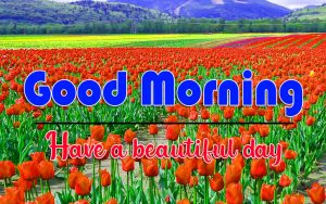 Nature New HD Full HD Good Morning Images Pics Download 2