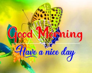 New Butterfly Good Morning Images Pics Download
