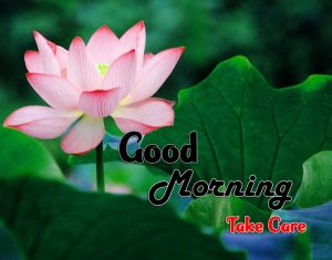 New Good Morning Images Free Hd