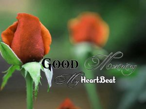 New Good Morning Images Photo 4