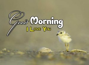 New Good Morning Images Pictures 2