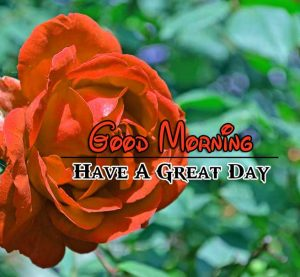 New Good Morning Images Piuctures 1