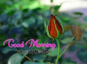New Good Morning Images Wallpaper 5