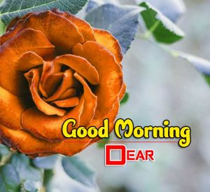 New Good Morning Photo Images 1