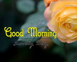 New Good Morning Pics Free 1