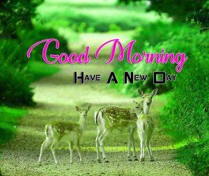 New Good Morning Pics Hd Free 1