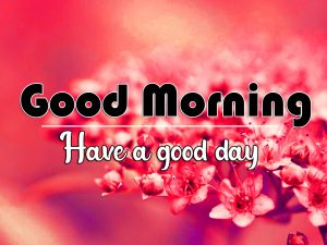 New Top Flower Good Morning Images Download