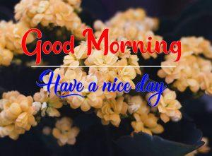 New Top Flower Good Morning Wallpaper Download