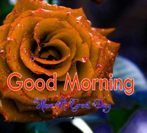 Nice Good Morning Photo 1