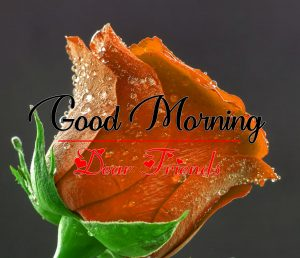 Red Rose All Good Morning Images Pics HD
