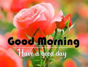 Red Rose Flower Good Morning Pics Images Download