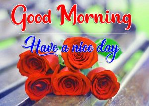 Red Rose Free Flower Good Morning Images