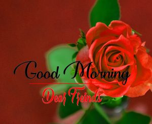 Red Rose Good Morning Images Pics New Download
