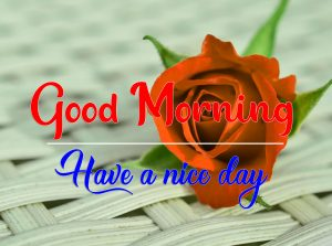 Red Rose Good Morning Images Pics pictures New
