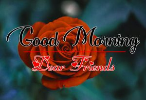 Rose Free HD All Good Morning Images