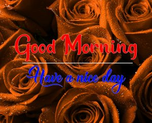 Rose Good Morning Images Pics Download 2