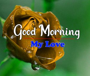 Rose Good Morning Images Pics Download