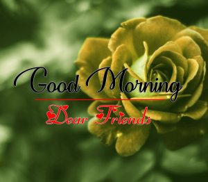 Rose Good Morning all Images Pics Download