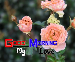 Top Good Morning Images Download 1