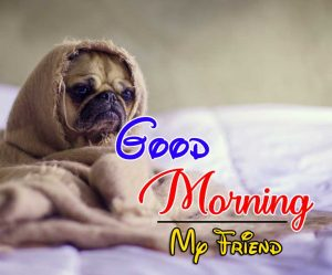 Top Good Morning Photo Images 1