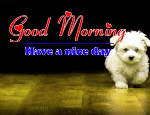 Top Good Morning all Images Wallpaper Download