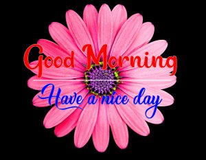 Top HD All Good Morning Images 2