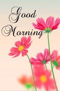 Beautiful Flower Good Morning