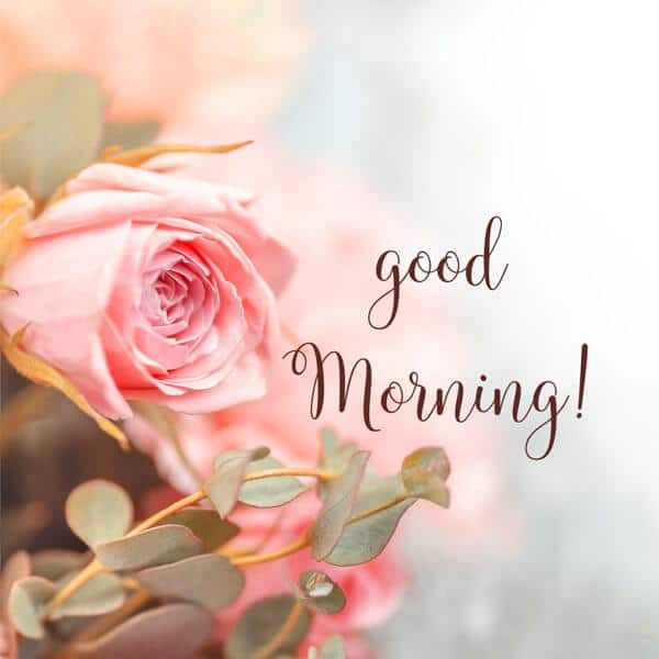 479+ Love Good Morning Wishes Images Download